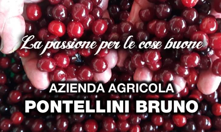 Azienda Agricola Pontellini Bruno: chi siamo