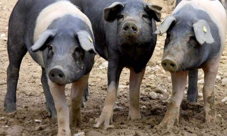 Azienda Agricola Country Pig: chi siamo